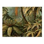 Vintage Ferns and Palm Tree Botanical Postcard