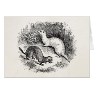 Vintage Ferret 1800s Ferrets Weasels Minks Stationery Note Card