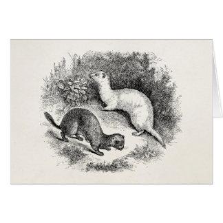 Vintage Ferret 1800s Ferrets Weasels Minks Stationery Note Card