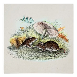 Vintage Field Mouse w Mushrooms Old Retro Mice Poster