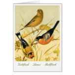 Vintage Finch Trio on Antique Lithograph Greeting Card