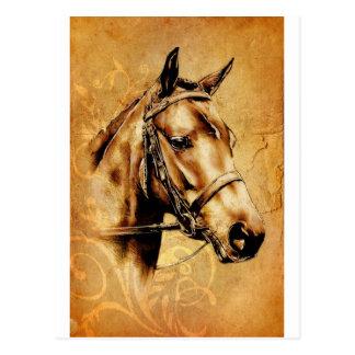 Vintage fineart F049 horse Postcard