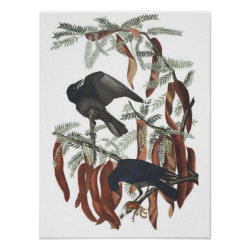 Matte Poster with Audubon's Fish Crow design