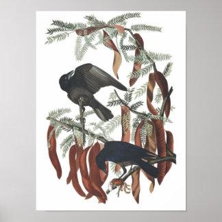 Vintage Fish Crow Poster Print