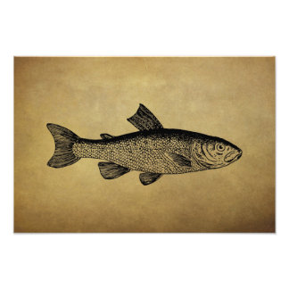 Vintage Fish Illustration Photographic Print