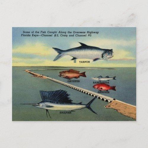 Vintage Fish of Florida Keys Postcard