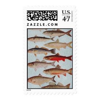 Vintage Fish Postage