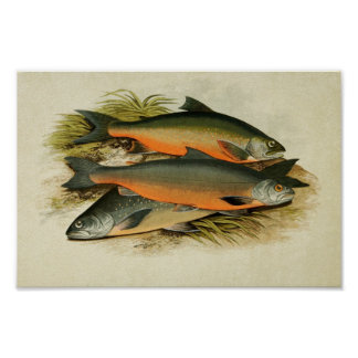 Vintage Fish Print 040 | Assorted Charr