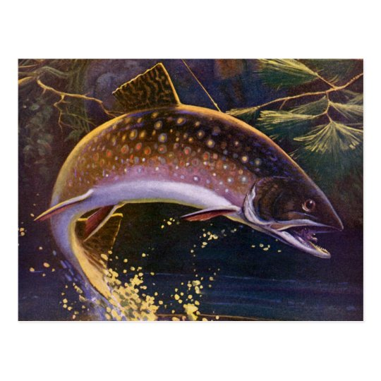 Vintage Fish, Sports Fishing Trout Catch n Release Postcard