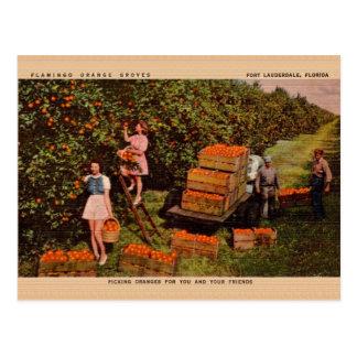 Vintage Flamingo Orange Groves Florida Postcard