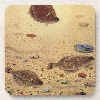 Vintage Flat Fish Flounders, Marine Ocean Life Drink Coaster