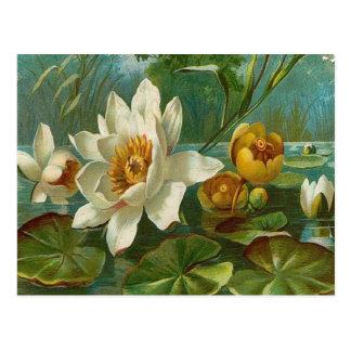 Vintage, flor acuática, cumpleaños de la esposa tarjetas postales