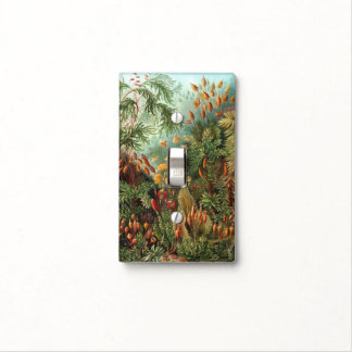 Vintage Flora Moss Plant Muscinae by Ernst Haeckel Light Switch Plate