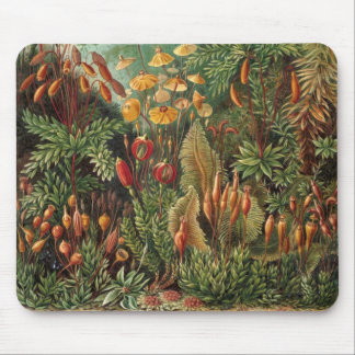 Vintage Flora Moss Plant Muscinae by Ernst Haeckel Mousepads