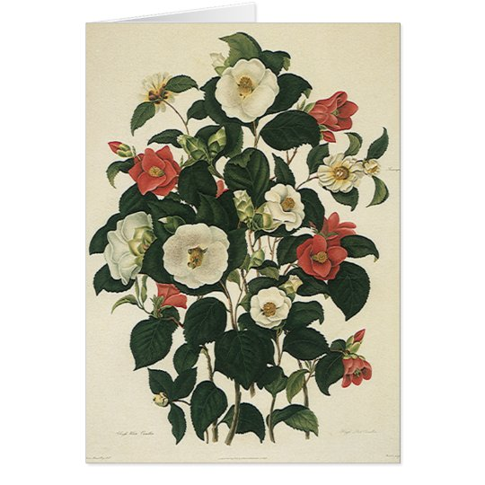 Vintage Floral, Antique Garden Roses Flowers Card
