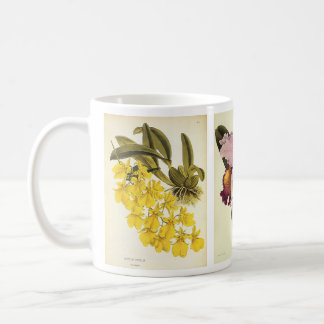 Vintage Floral Botany, Tropical Orchid Flowers Coffee Mug