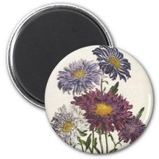 Vintage floral, flores púrpuras antiguas del aster iman para frigorífico