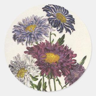 Vintage floral, flores púrpuras antiguas del aster pegatina redonda