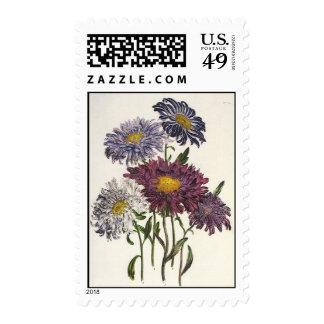 Vintage floral, flores púrpuras antiguas del aster sellos