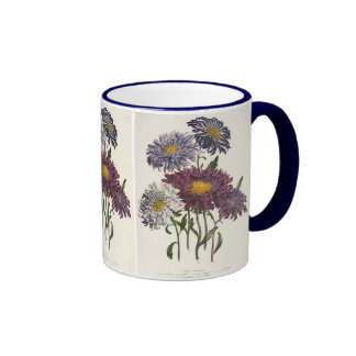 Vintage floral, flores púrpuras antiguas del aster taza a dos colores