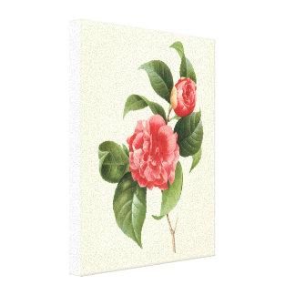 Vintage floral, flores rosadas de la camelia por impresión en lienzo