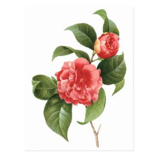 Vintage floral, flores rosadas de la camelia por tarjetas postales