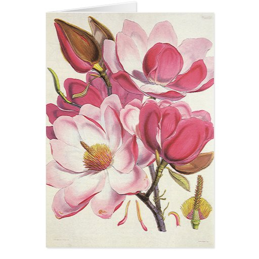Vintage floral, flores rosadas florecientes de la  felicitaciones