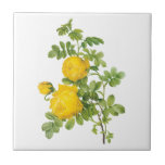 """Vintage Floral Flowers, Yellow Roses by Redoute Tile<br><div class=""""desc"""">Vintage illustration botanical flower design featuring a bunch of blooming yellow roses from a spring garden,  Yellow Rose (Rosa sulfurea). By the famous floral botany artist Pierre Joseph Redoute (1759-1840). The yellow rose is a symbol of friendship.</div>"""