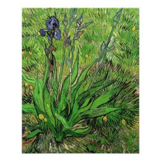 Vintage floral garden flower Iris by Van Gogh. Flyer