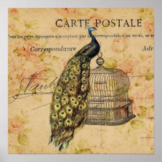 vintage floral peacock birdcage paris fashion poster