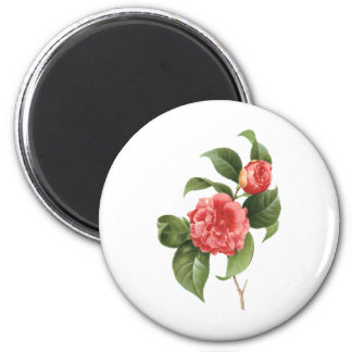 Vintage Floral, Pink Camellia Flowers by Redoute Magnet
