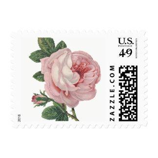 Vintage Floral Pink Rose Flower - Shabby Chic Postage