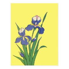 Vintage Floral, Purple Spring Garden Irises Post Card