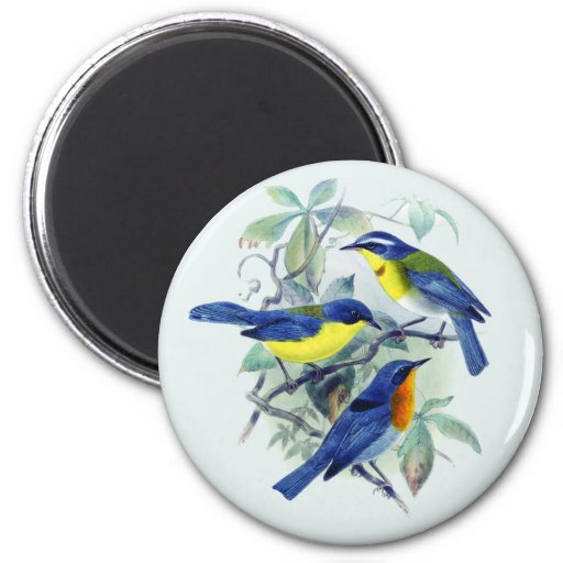 Vintage Floral Songbirds Apparel and Gifts 2 Inch Round Magnet