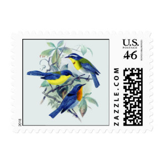 Vintage Floral Songbirds Apparel and Gifts Postage Stamps