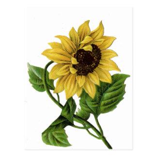 Vintage Floral Sunflower Yellow & Green Flower Postcard