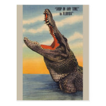 Vintage Florida Alligator Post Card