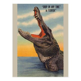 Vintage Florida Alligator Post Card