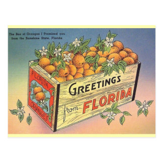 Vintage Florida Oranges Postcard