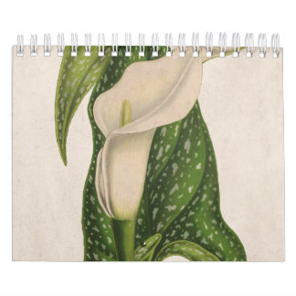 Vintage Flower Calla Lily Green Leaves Closeup Calendar