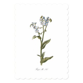 Vintage flower forget me not wall art or card