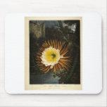 Vintage Flower Night-Blooming Cereus Thornton Mouse Pad