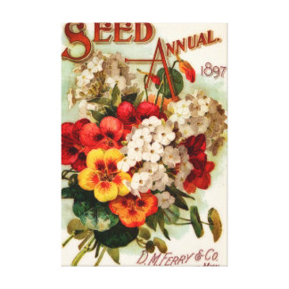 Vintage Flower Seed Annual DM Ferry Canvas Print