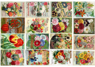 Seed Packets Wrapping Paper Zazzle