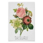 Vintage Flowers, Anemone Roses Clematis by Redoute Posters