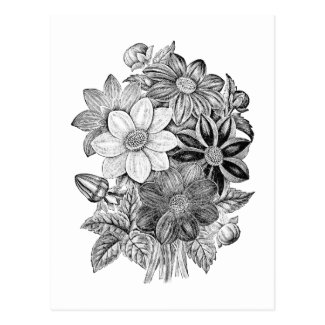 Vintage Flowers Black White Print Postcard