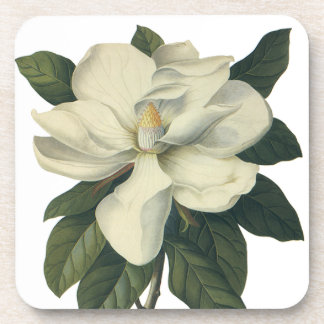 Vintage Flowers, Blooming White Magnolia Blossom Drink Coaster