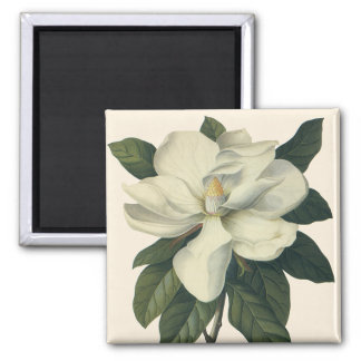 Vintage Flowers, Blooming White Magnolia Blossom 2 Inch Square Magnet