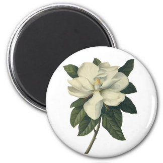 Vintage Flowers, Blooming White Magnolia Blossom Refrigerator Magnets