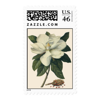 Vintage Flowers, Blooming White Magnolia Blossom Postage